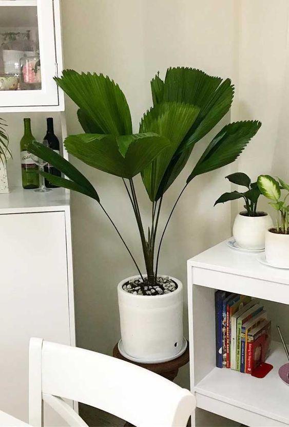 les types de plantes à avoir à l'intérieur