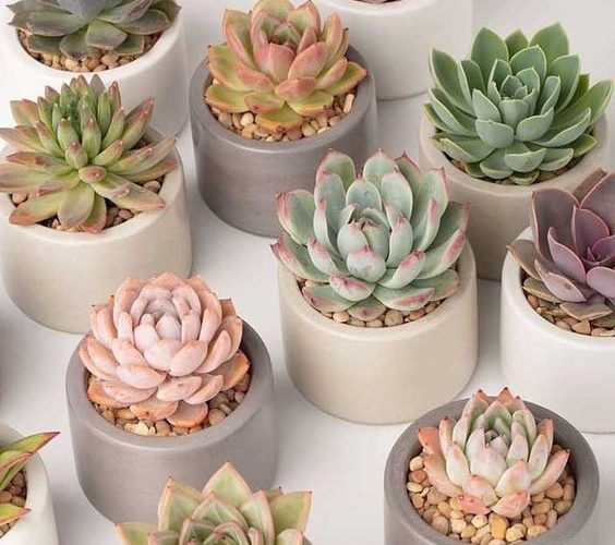 1584930649 510 10 types de plantes a avoir a linterieur