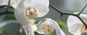 Comment planter des orchidées Pas à pas