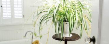 Какие растения выбрать для ванной комнаты?