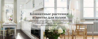 цветы и растения в интерьере кухни