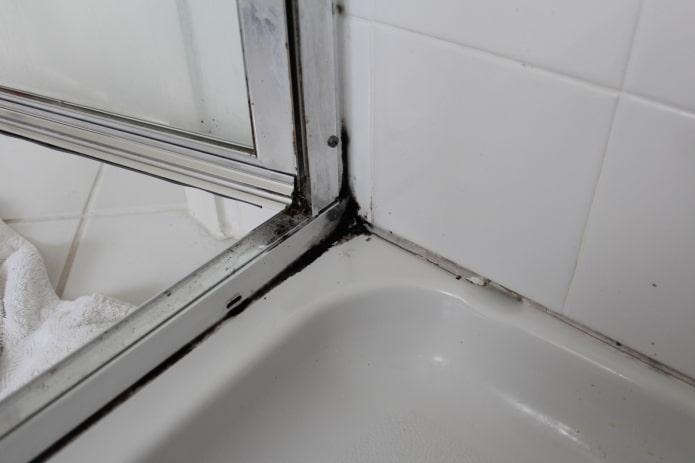 moisissure sous la douche