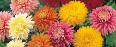 1622008681 79 Des plantes pour purifier lair de la maison Rencontrez les