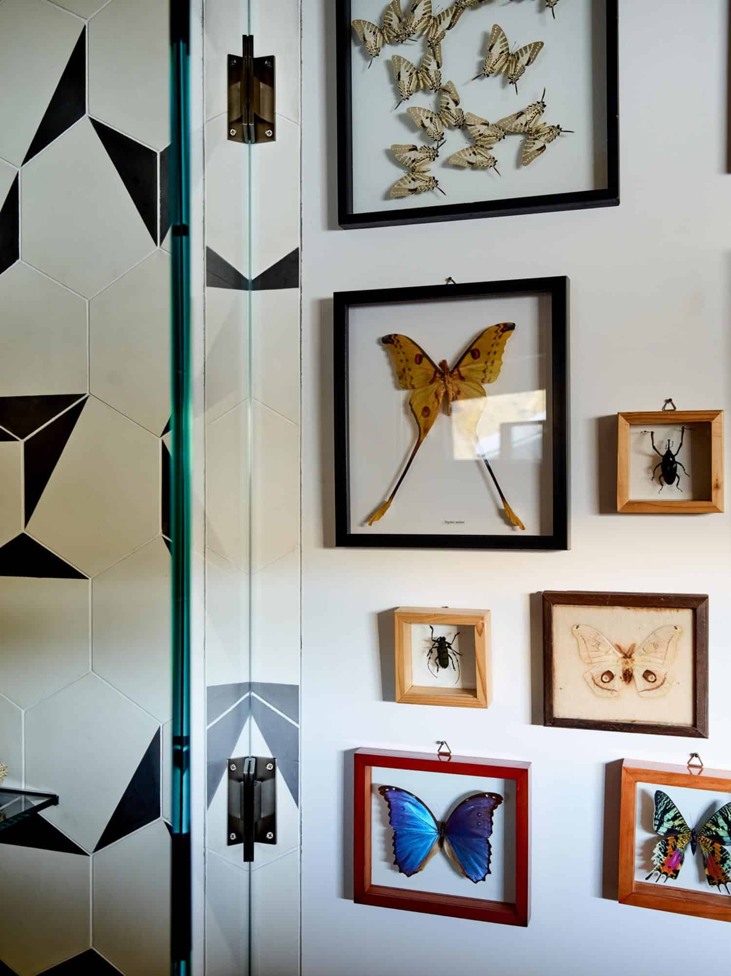 collection-papillon-mur-salle-de-bain-moderne-invité