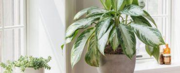 Comment décider de la quantité de lumière solaire dont vos plantes d'intérieur ont besoin