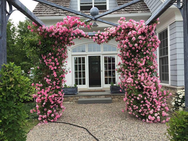 Rose Canadienne - John Davis Photos