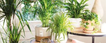 How To Take Care Of The Plants While You Are On Vacation