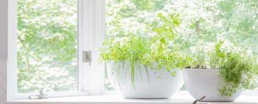 Why Make A Kitchen Garden?